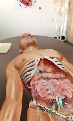 2020人体解剖学图谱(魔玩单机)