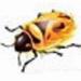 firebug中文版  v3.0.11 官方版
