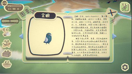 鸟之森游戏下载