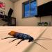 蟑螂模拟器中文版