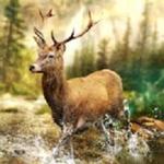 狩猎冲突无限金币版