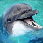 海洋动物模拟器无限经验版