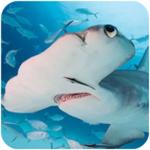 锤头鲨模拟器3d无限金币版