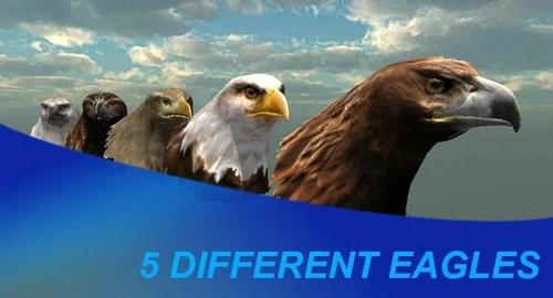 鹰狩猎之旅游戏下载