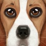终极狗狗模拟器无限升级版
