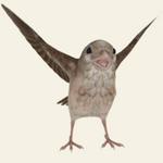 救救那小鸟安卓版