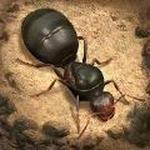 蚂蚁地下蚁国